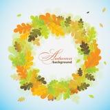 Oak autumn background, vector Stock Photos