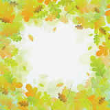 Oak autumn background, vector Stock Photos