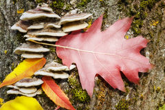 Oak autumn leaf on a tree trunk Stock Image