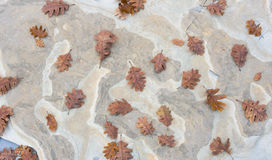Oak autumn leaves background on the stone. Autumn leaves background on the stone Royalty Free Stock Photos
