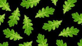 Oak autumn leaves Stock Photo
