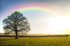 Oak in autumn with rainbow Royalty Free Stock Photo