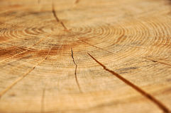 Oak background Stock Images