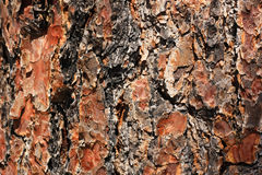 Oak bark. Bark of a tree of an oak, an abstract, background, texture Royalty Free Stock Images