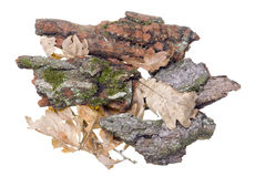 Oak bark Stock Image