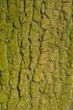 Oak bark Stock Images