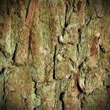 Oak bark background Stock Photos