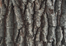 Oak bark background Royalty Free Stock Image