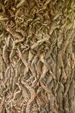 Oak bark Stock Photo