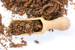 Oak Bark Herb Stock Image