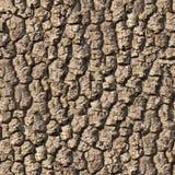 Oak Bark. Seamless Texture. Stock Photo