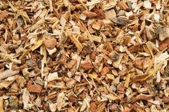 Oak bark Stock Photography