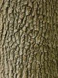 Oak Bark Wallpaper Stock Image