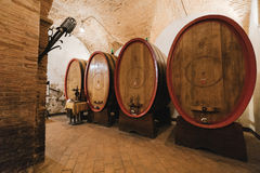Oak barrels in an old wine cellar. Royalty Free Stock Image