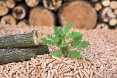 Oak biomass - renewable materials. Oak biomass - wood, pellets, young tree, close up shot stock images