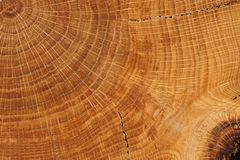 Oak board with growth rings close up Stock Photography