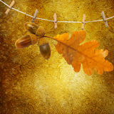 Oak branch with acorns hanging on clothesline Stock Photography
