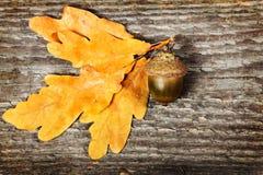 Oak branch Royalty Free Stock Image