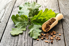 Oak branch and oak bark Royalty Free Stock Images