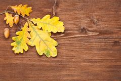 Oak branch over wooden background Stock Images