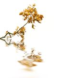 Oak branch with reflection Stock Photo