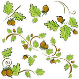 Oak branches for decoration Stock Image