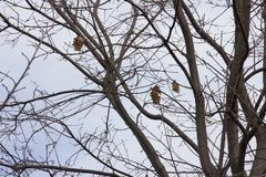 Oak branches with a small number of dry leaves against the sky in autumn royalty free stock image