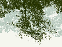 Oak branches in the summer. Vector image of the branches of the oak trees royalty free illustration