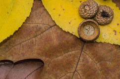 Oak brown autumn leaves stack Stock Photo
