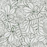 Oak, chestnut, rowan, maple leafs Royalty Free Stock Photo
