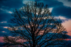 Oak at colorful sunset Stock Photos