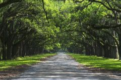 Oak cover road Royalty Free Stock Photos