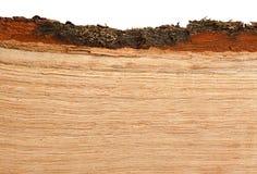 Oak firewood background Stock Image
