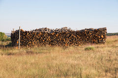 Oak firewood Cut and Stacked in the Bush Stock Photography