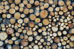 Oak firewood Cut and Stacked Royalty Free Stock Image