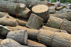 Oak Firewood Wood Pile Background Stock Photo