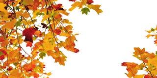 Oak foliage in autumn Stock Photography