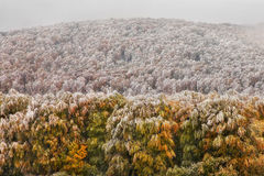 Oak forest in autumn Royalty Free Stock Photography