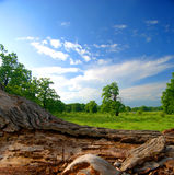 Oak forest with blue sky Stock Images