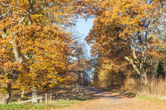 Oak forest Royalty Free Stock Photo