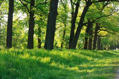 Oak forest in early spring. Landscapes Royalty Free Stock Image