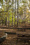 Oak forest picnic site Stock Image