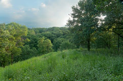 Oak Forest at Pine Bend Bluffs Royalty Free Stock Photos