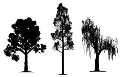 Oak, forest pine and weeping willow tree. Silhouette on isolated white background. EPS file available Royalty Free Stock Photo
