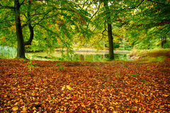 Oak forest. Pond in oak forest at fall Royalty Free Stock Photo