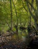 Oak forest. River in zamora, spain Royalty Free Stock Photos