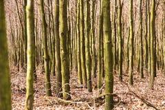 Oak forest Stock Photo