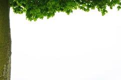 Oak frame Royalty Free Stock Photo