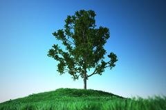 Oak on Grass hill Royalty Free Stock Photos