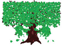 Oak with green leaves Stock Photography